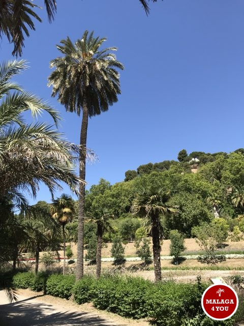 jardín botánico exotisch