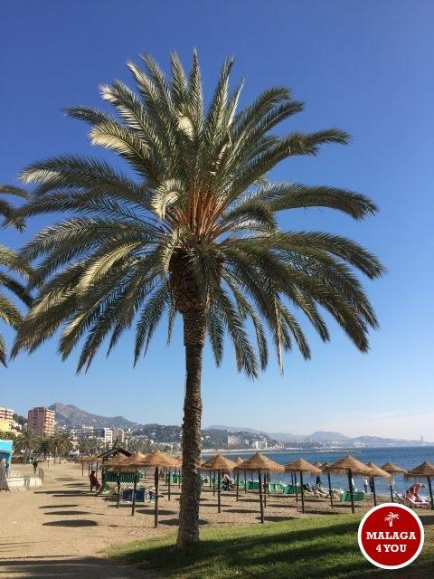 top 10 malaga playa de la malagueta