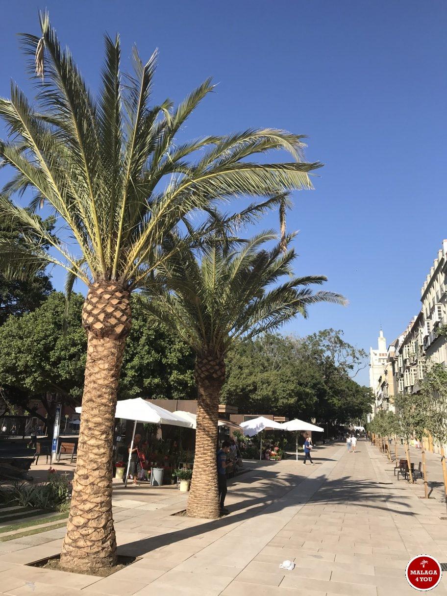 Alameda Principal palmboom